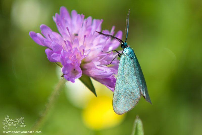 Papillons Et Fleurs, L'incroyable Biodiversité Des Balkans