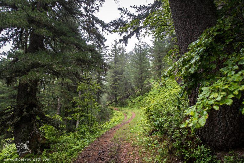 Dans La Forêt Aux Myrtilles - Peaks Of The Balkans