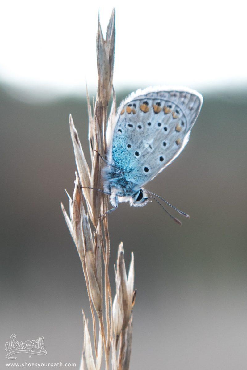 Petit Papillon Bleu Nous Tenant Compagnie Près De Notre Tente