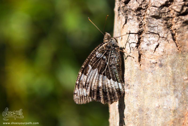 Petit Papillon Fait La Sieste Au Soleil