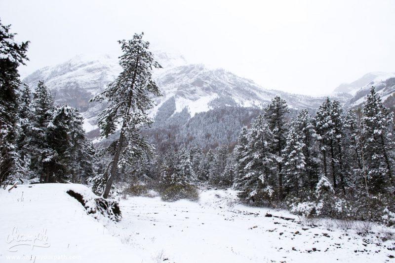 La Vallée Dans Laquelle Nous Randonnons Pour Voir Le Cirque De Gavarnie. France, Occitanie
