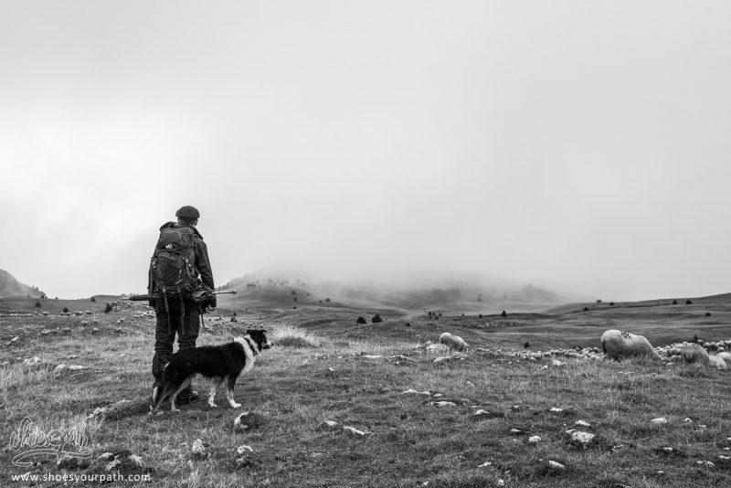 Le Berger Et Son Chier Face Au Brouillard Du Vercors