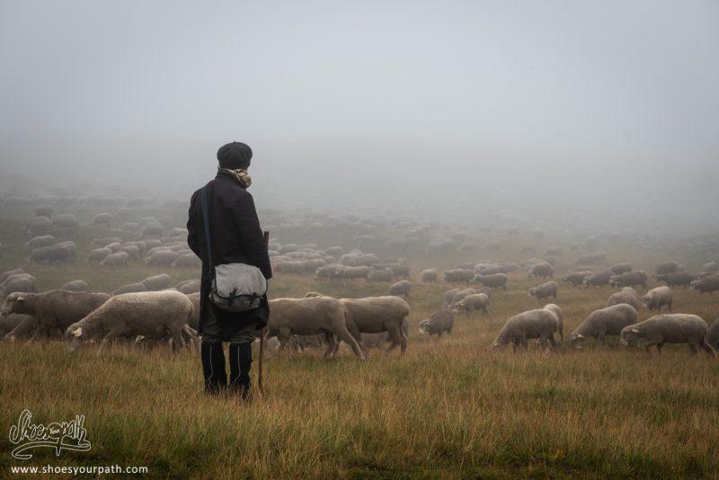 Un Ami De Nos Amis, Venu Passer Un Peu De Temps à La Bergerie, Perdu Avec Nous Dans Le Brouillard