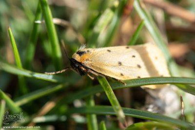 Joli Petit Papillon Batifollant Dans Les Herbes Du Vercors