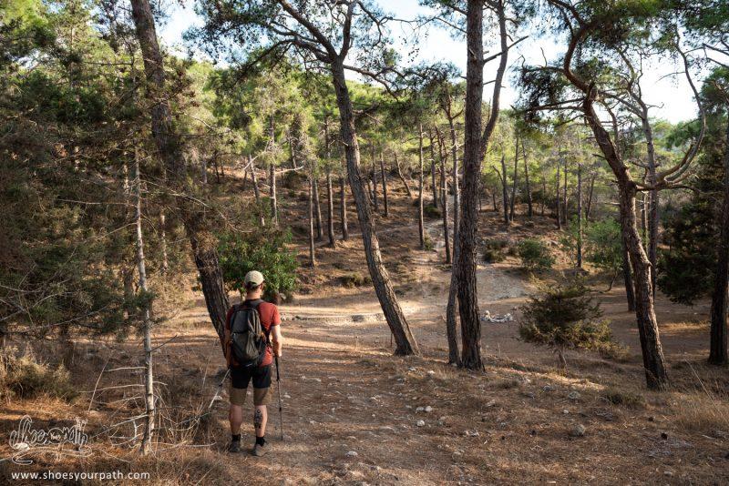 Après Un Moment Sur Le Adonis Nature Trail, Nous Trouvons Refuge Dans L'ombre D'une Belle Forêt De Pins
