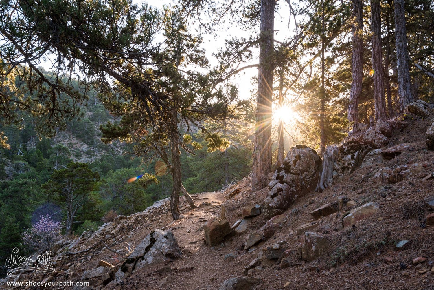Sunrise from inside the pine forest on the Atalanti Nature Trail - Cyprus