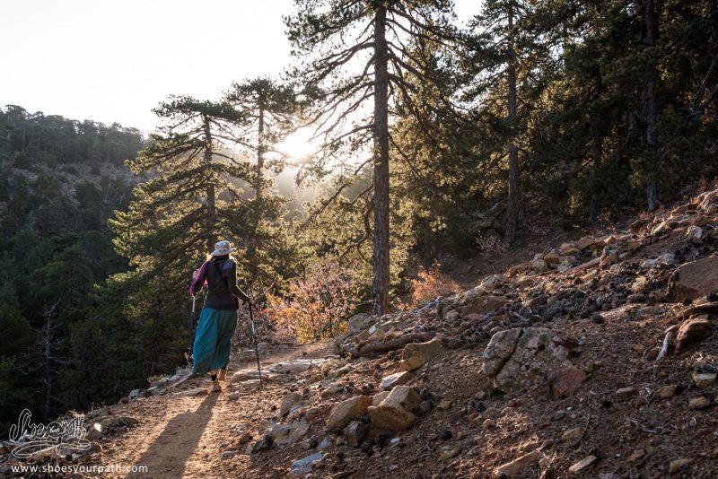 Contre-jour Matinal Dans Les Forêts De Pin Du Massif De Troodos Sur Le Atalanti Nature Trail - Chypre