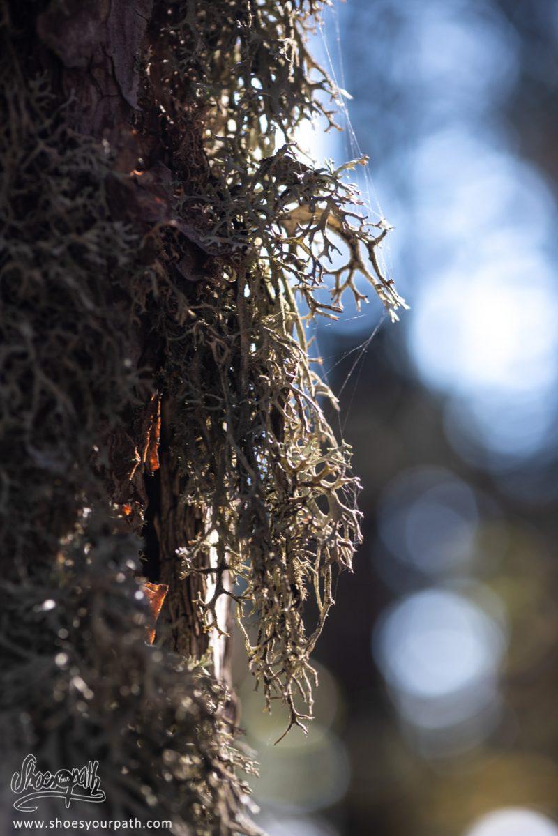 Mousse De Forêt Sur Tronc D'arbre