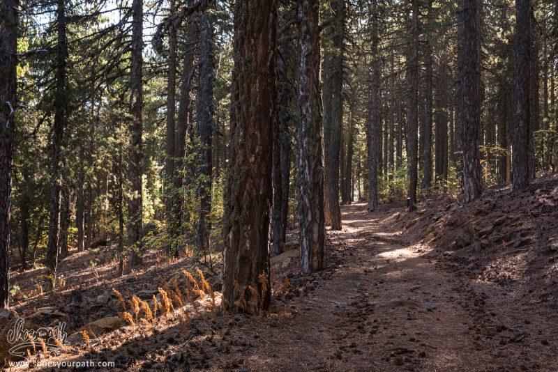 A L'ombre Des Forêts De Pin De Troodos Sur Le Atalanti Nature Trail