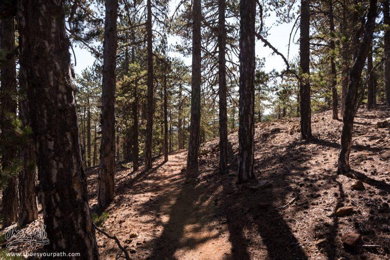 Les Forêts De Pin De Troodos Offrent Un Refuge Contre Le Puissant Soleil De Chypre Sur Le Atalanti Nature Trail