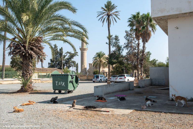 Les Chats Sur Le Parking De La Mosquée.Les Chats Sur Le Parking De La Mosquée.
