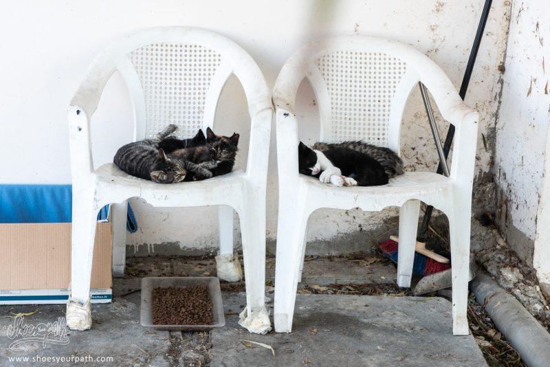 Les Chats Sur Le Parking De La Mosquée.