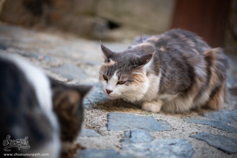 Dans Le Monde Des Chats De Chypre