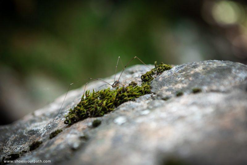 Petite Araignée Sur Son Rocher...