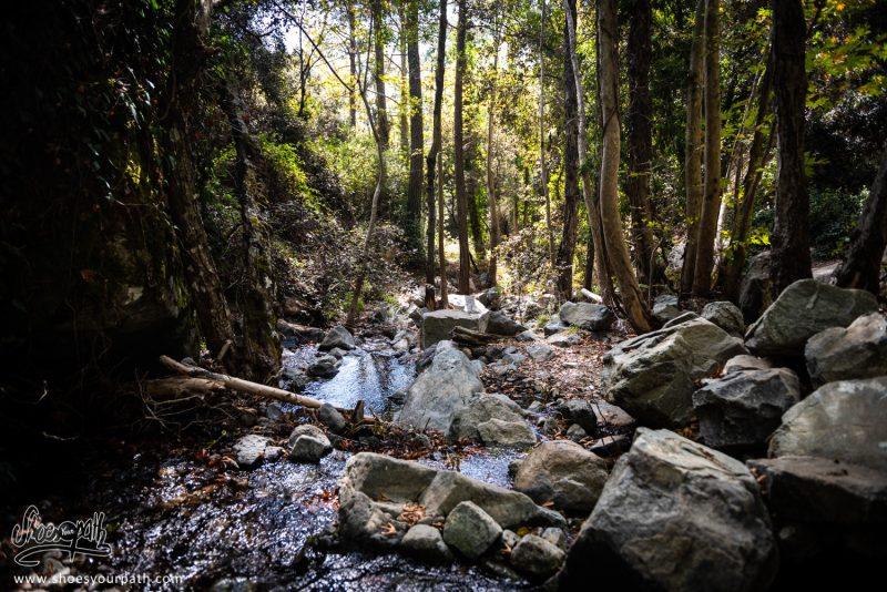 A L'ombre De La Canopée Sur Le Kalidonia Nature Trail - Chypre