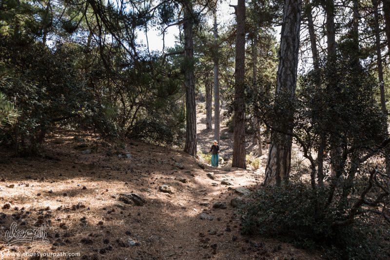 Dans Les Forêts De Troodos Sur Le Pouziaris Nature Trail