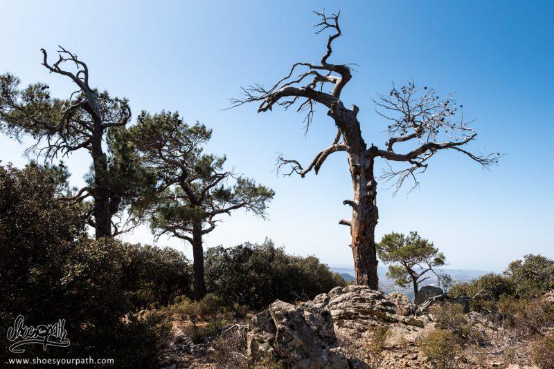Sur Les Hauteurs Du Pouziaris Nature Trail, Même Les Arbres On Chaud !