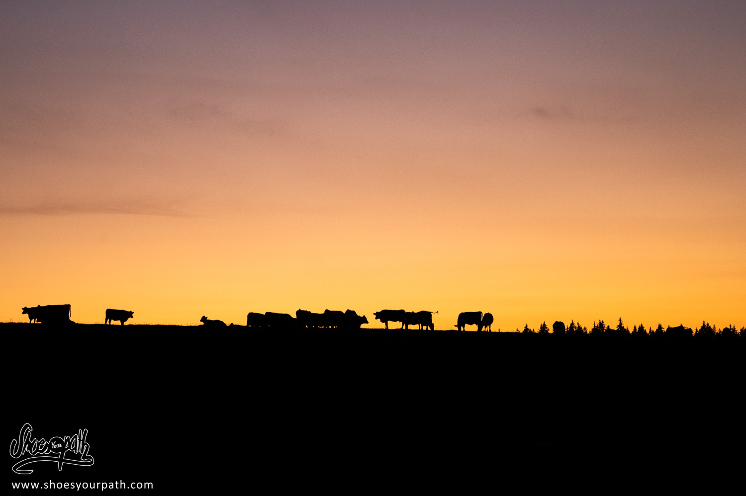 Sunset over the cattle's hill