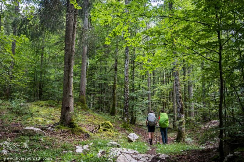 Dans La Forêt, Sur Le GR5 Entre Chaux-Neuve Et Chappelle-des-Bois