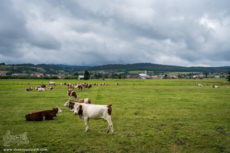 Sur Le GR5, Dans La Vallée Entre Mouthe Et Chaux-Neuve