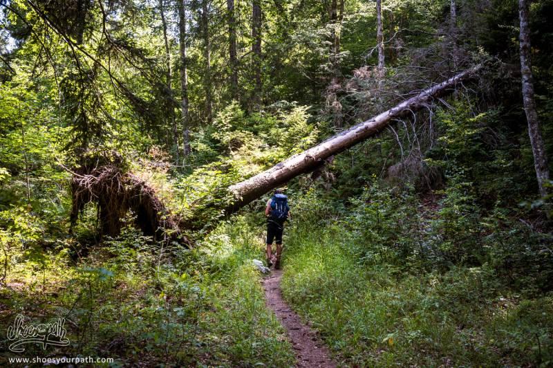 Dans Les Forêts à Proximité De Menthières